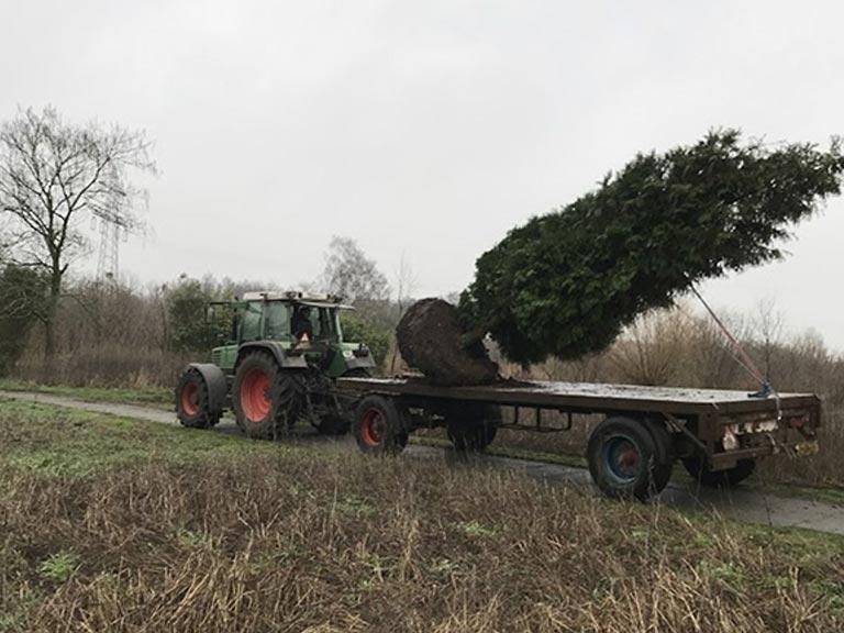Vervoer van grote bomen